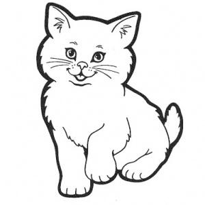 Informace o nalezení kočky